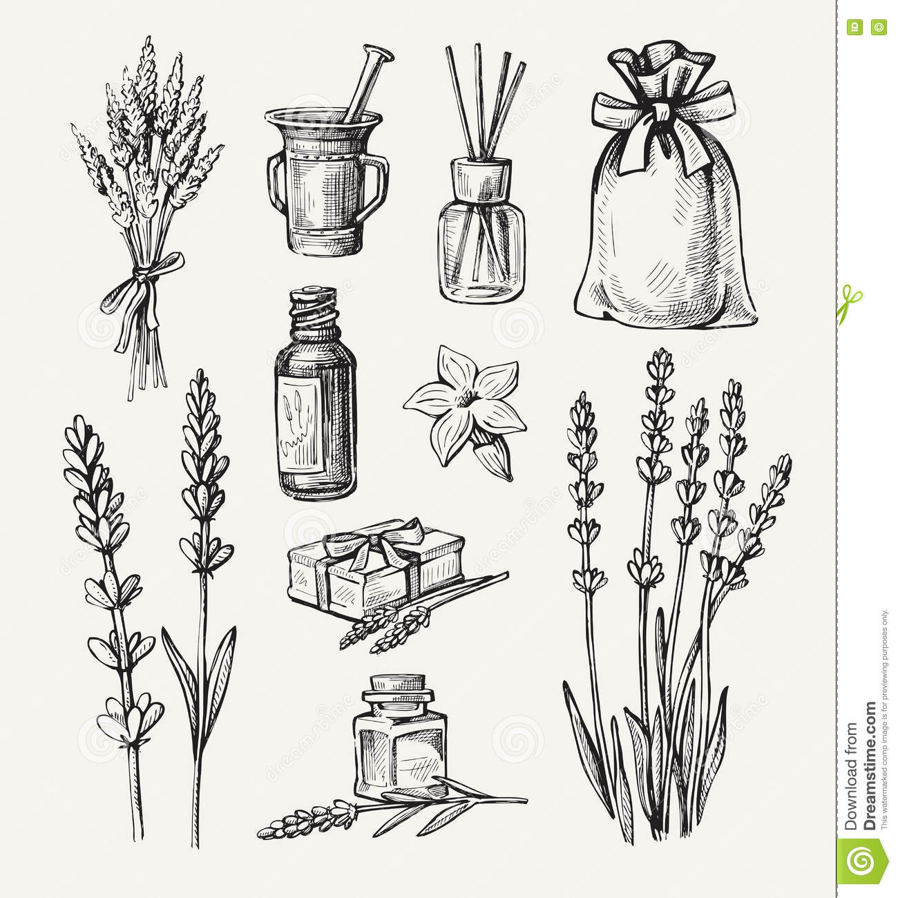 Vector Lavender Set Stock Vector Image Of Bunch
