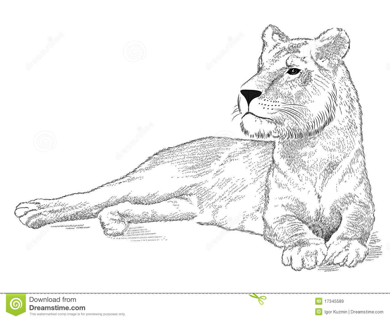 Vector Lioness Stock Vector Illustration Of Design Black