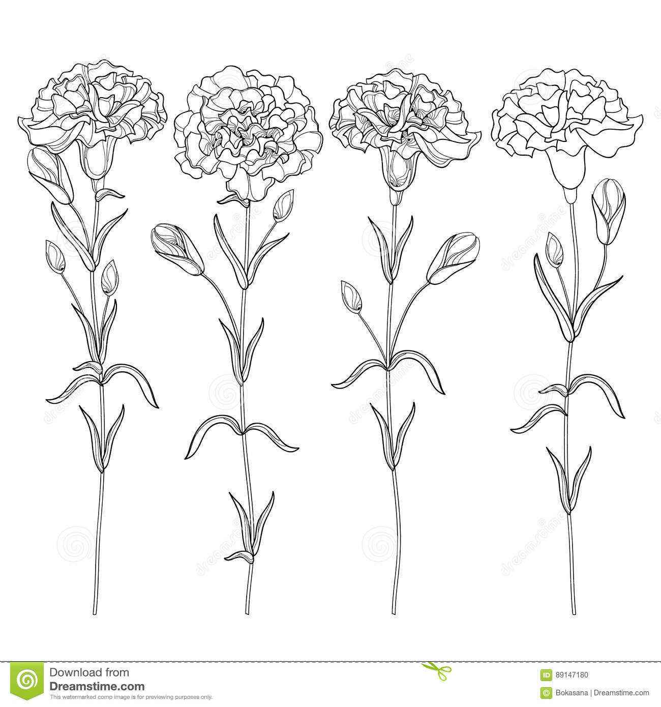Vector Set With Outline Carnation Or Clove Flower Bud And