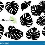 Cheese Plant Swiss Stock Illustrations 266 Cheese Plant Swiss Stock Illustrations Vectors Clipart Dreamstime