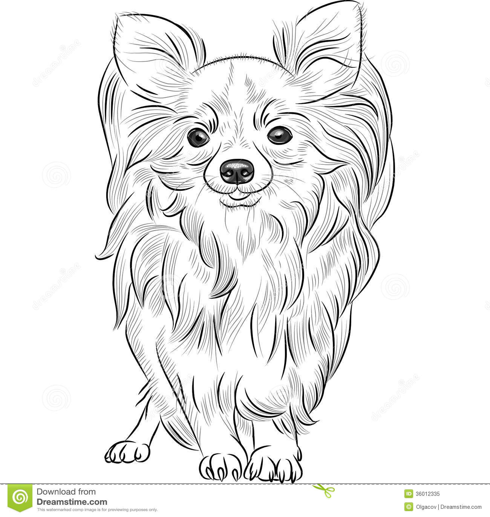 Vector Sketch Dog Chihuahua Breed Smiling Royalty Free