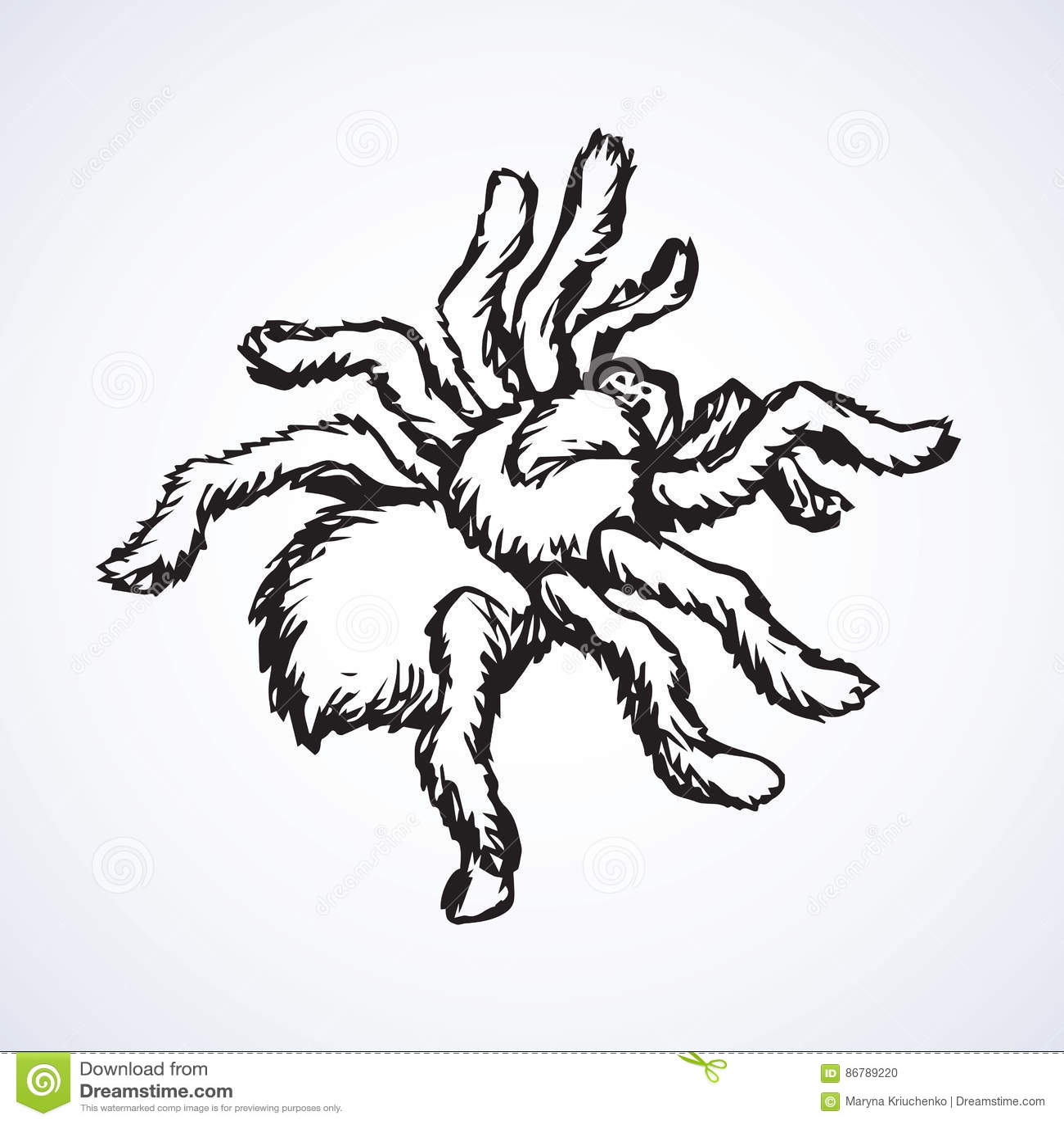 Vector Sketch Spider Vector Illustration