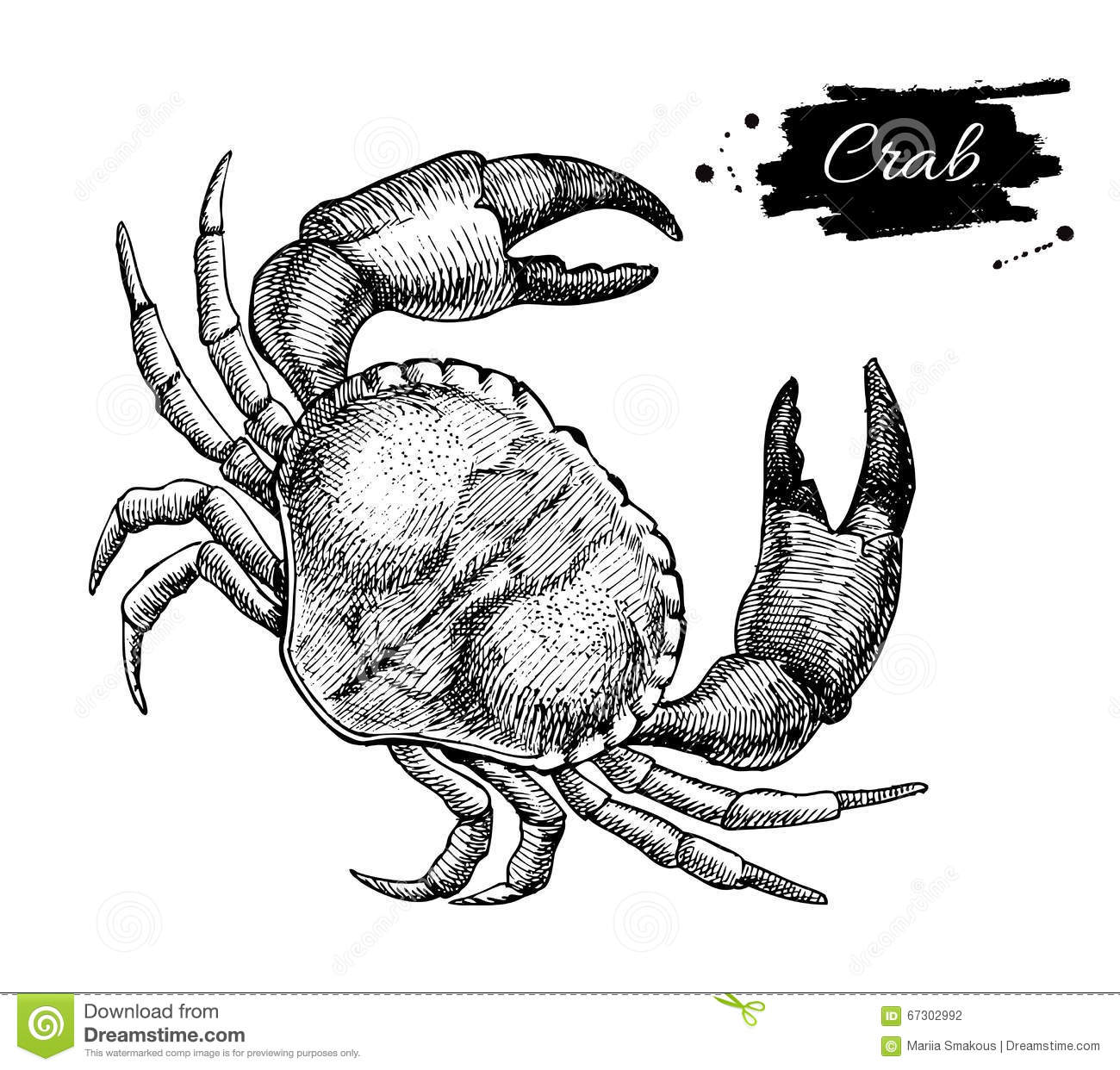 Vector Vintage Crab Drawing Hand Drawn Monochrome Seafood