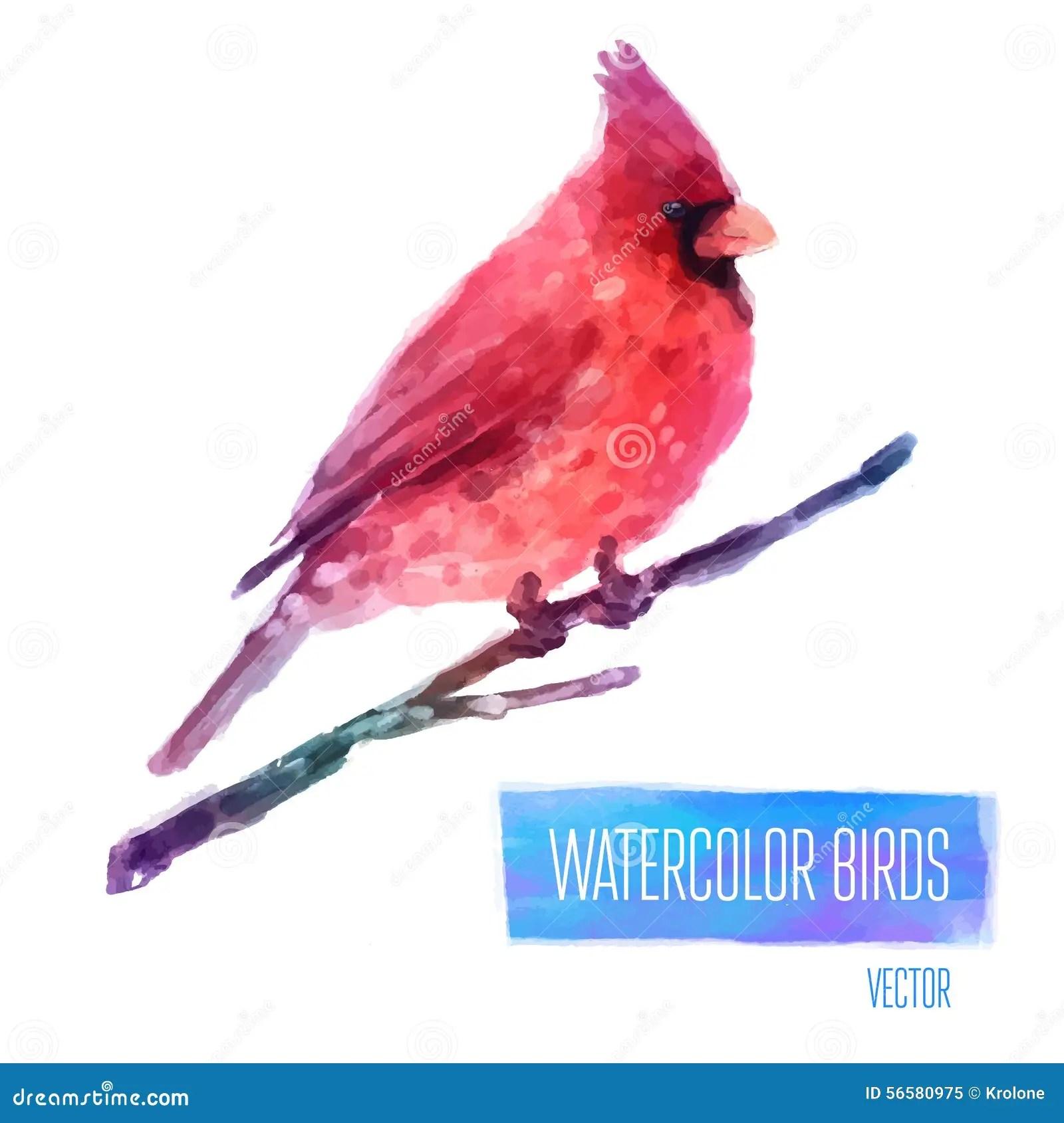 Vector Watercolor Bird Cardinal On The Branch Hand Stock Vector Image 56580975