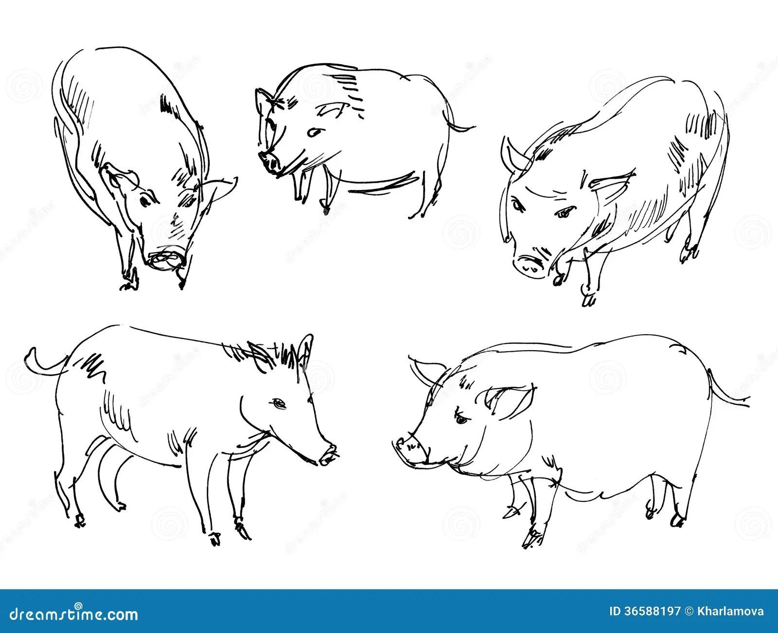 Vietnamese Pig Wild Boar Royalty Free Stock Photography