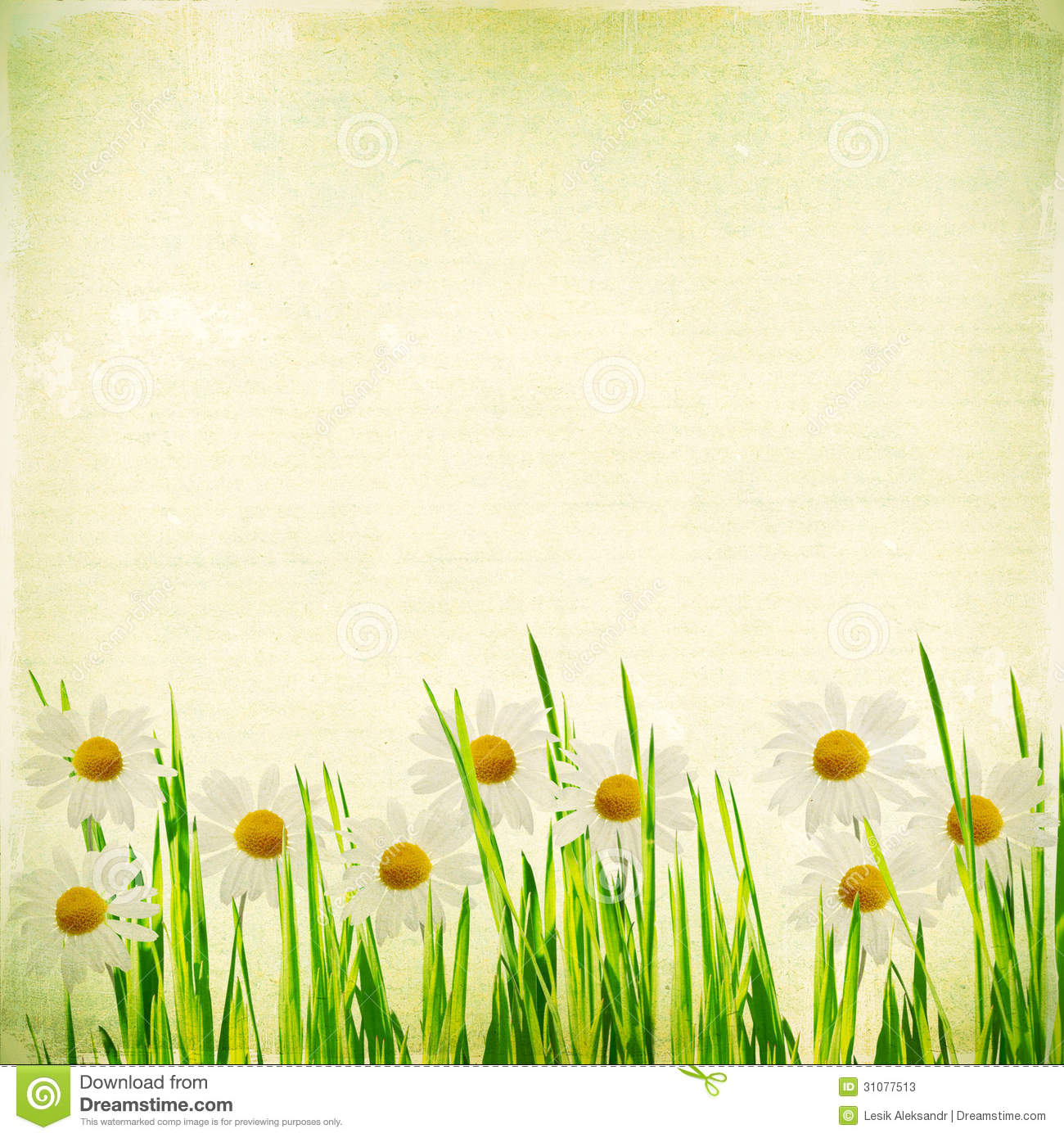 Vintage Floral Background With Daisies In Green Grass On A