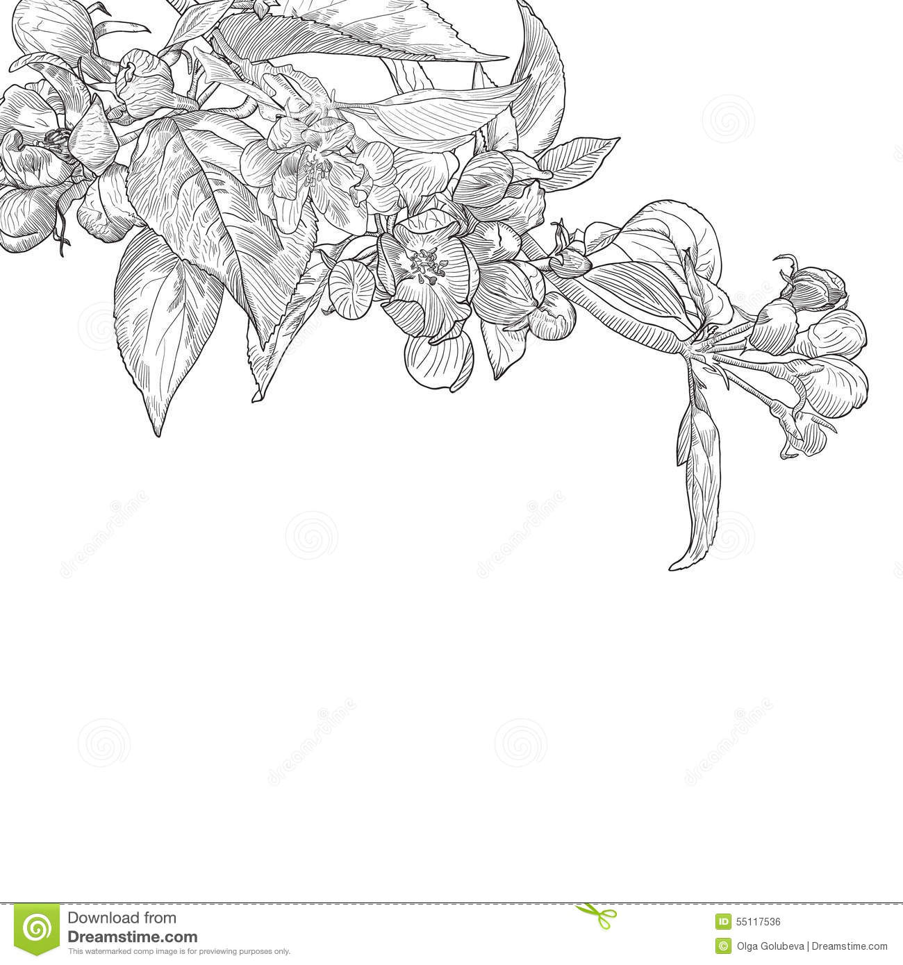 Vintage Hand Drawn Blooming Apple Tree Twig Stock Vector