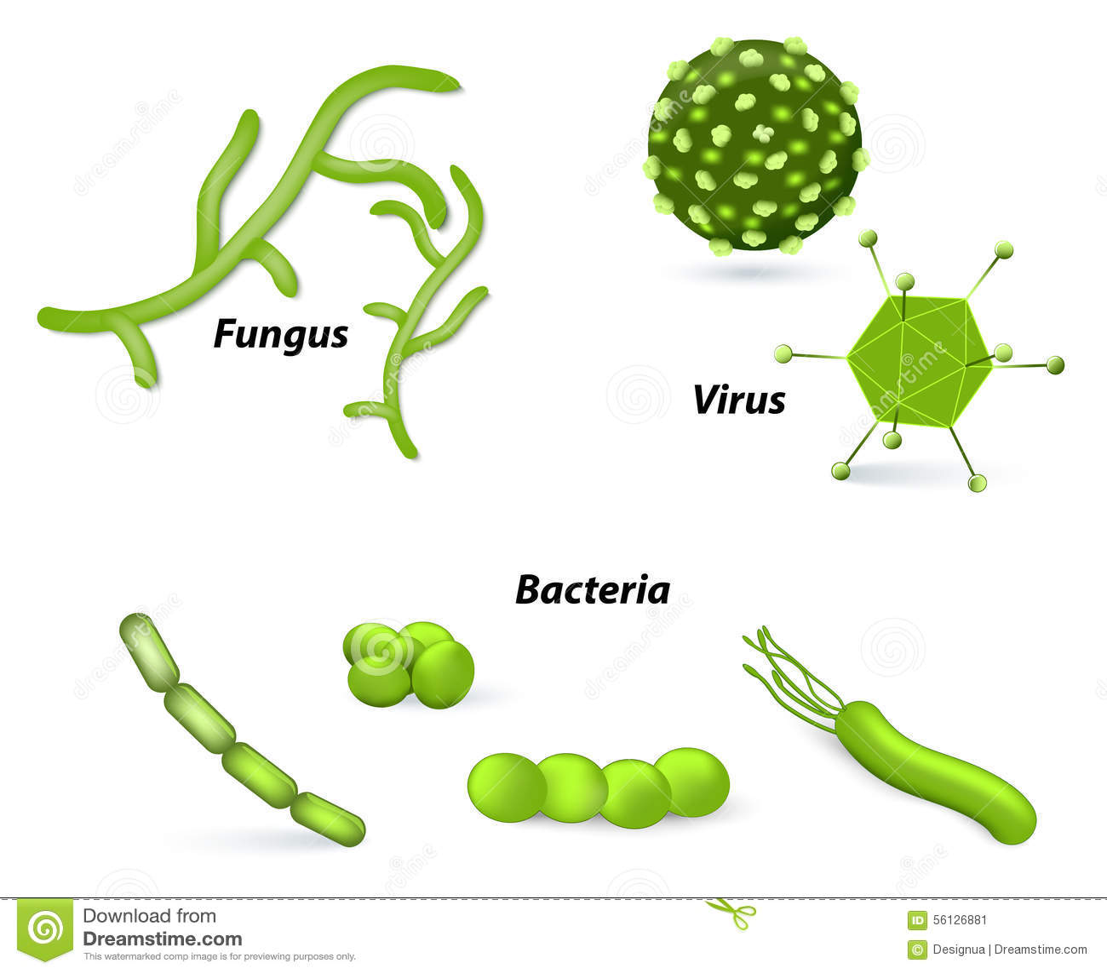 Virus Bacteria And Fungi Stock Vector Illustration Of Epidemic