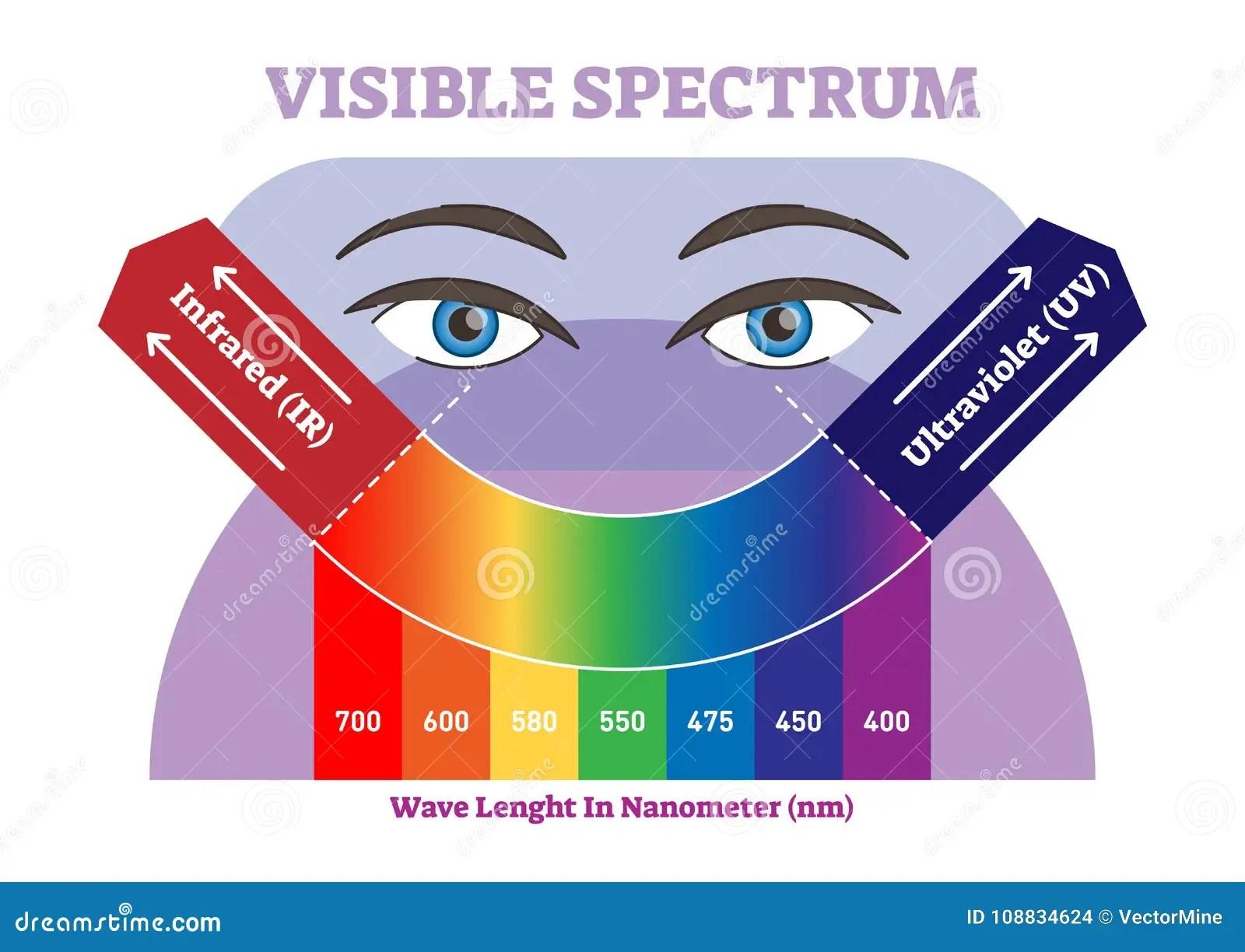 Visible Spectrum Vector Illustration Diagram Color Scheme