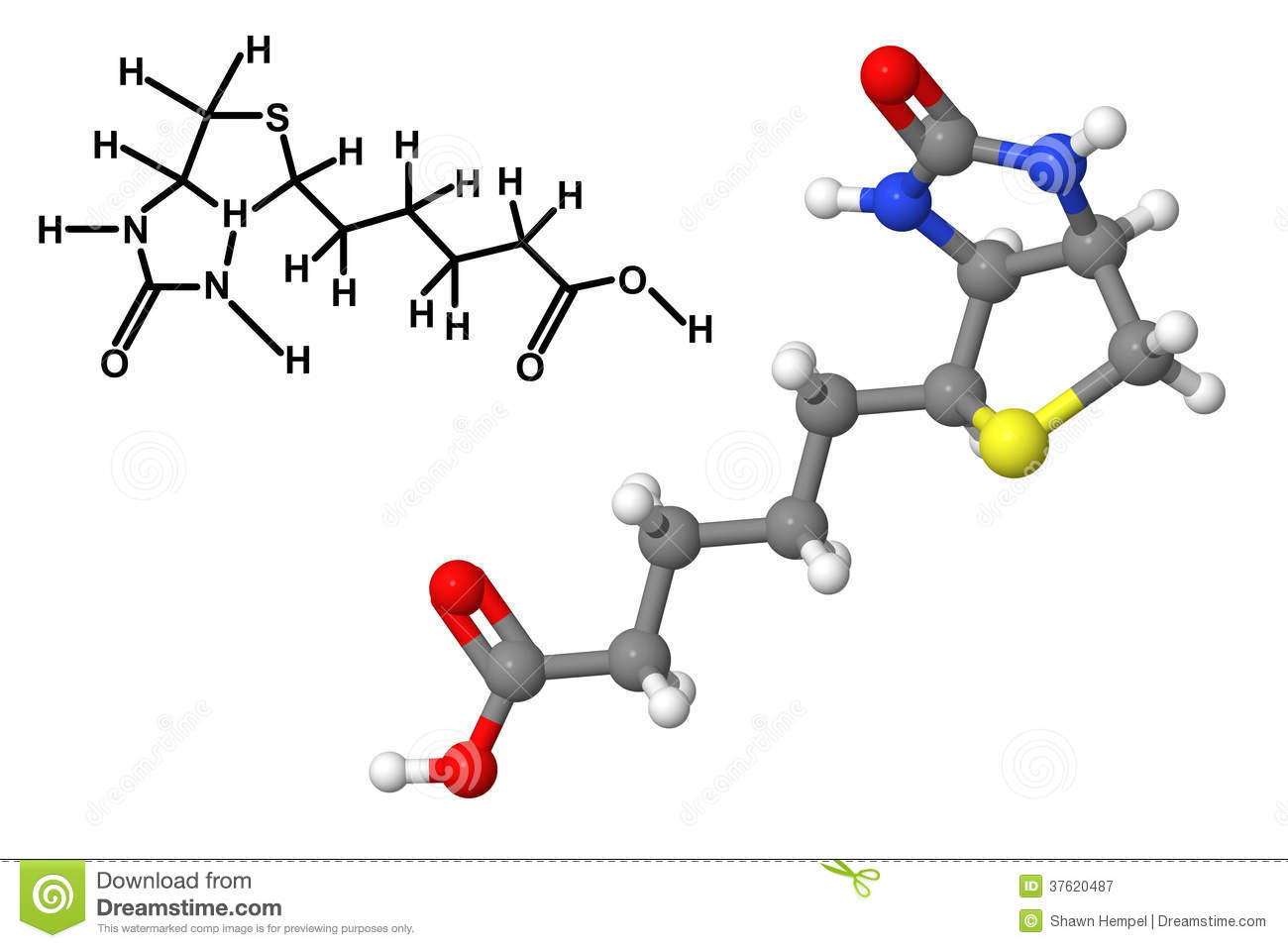 Vitamin B7 Molecule With Chemical Formula Stock