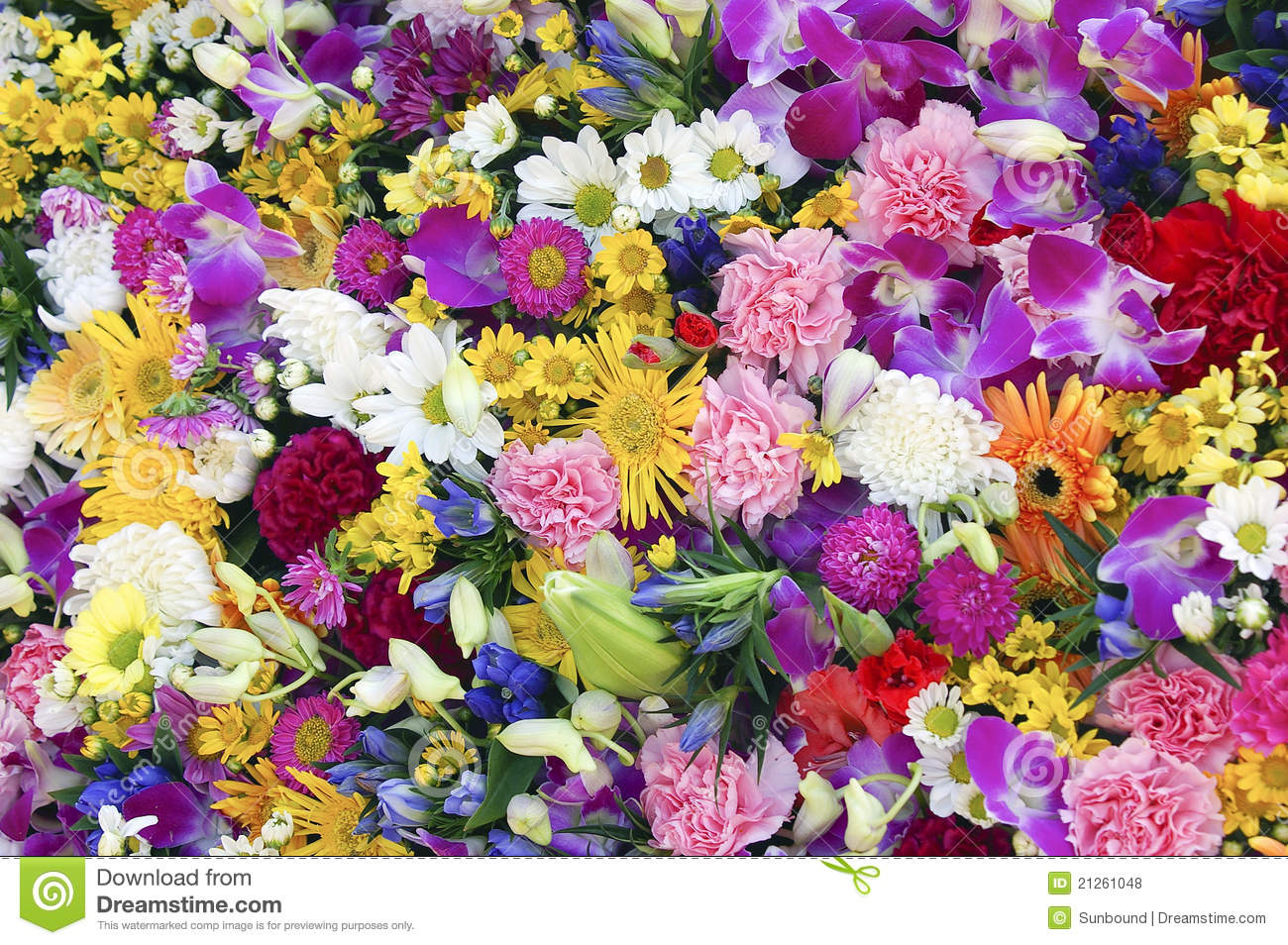 Wall Of Flowers Stock Photo Image Of Nature Background