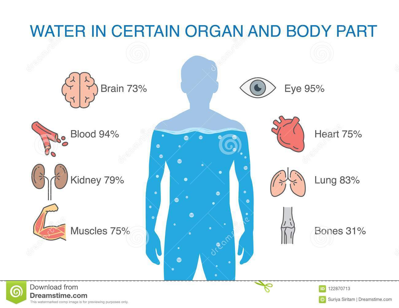 Water In Certain Organ And Body Part Of Human Stock