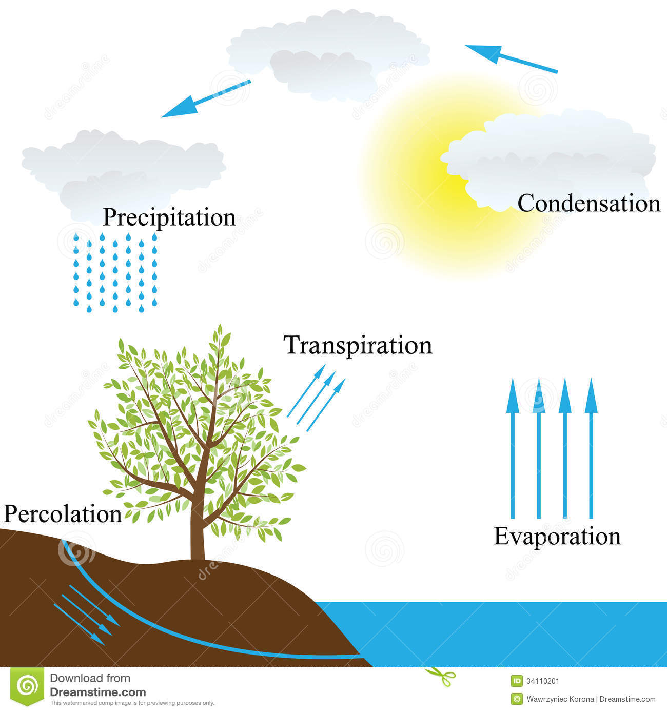Water Cycle In Nature Stock Image