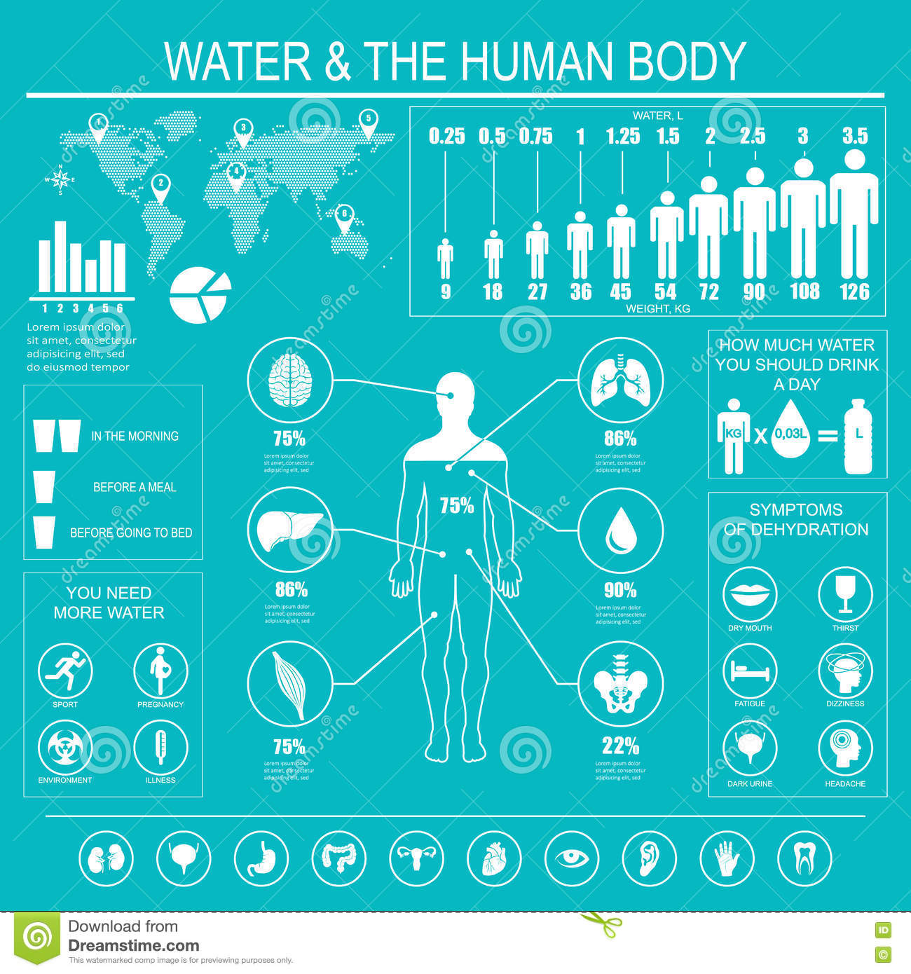 Water And Human Body Infographic Stock Vector