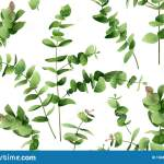 Watercolor Painting Eucalyptus Branches Leaves On White Green Leaf Seamless Pattern Background Watercolor Illustration Tropical E Stock Illustration Illustration Of Leaves Frame 180811991