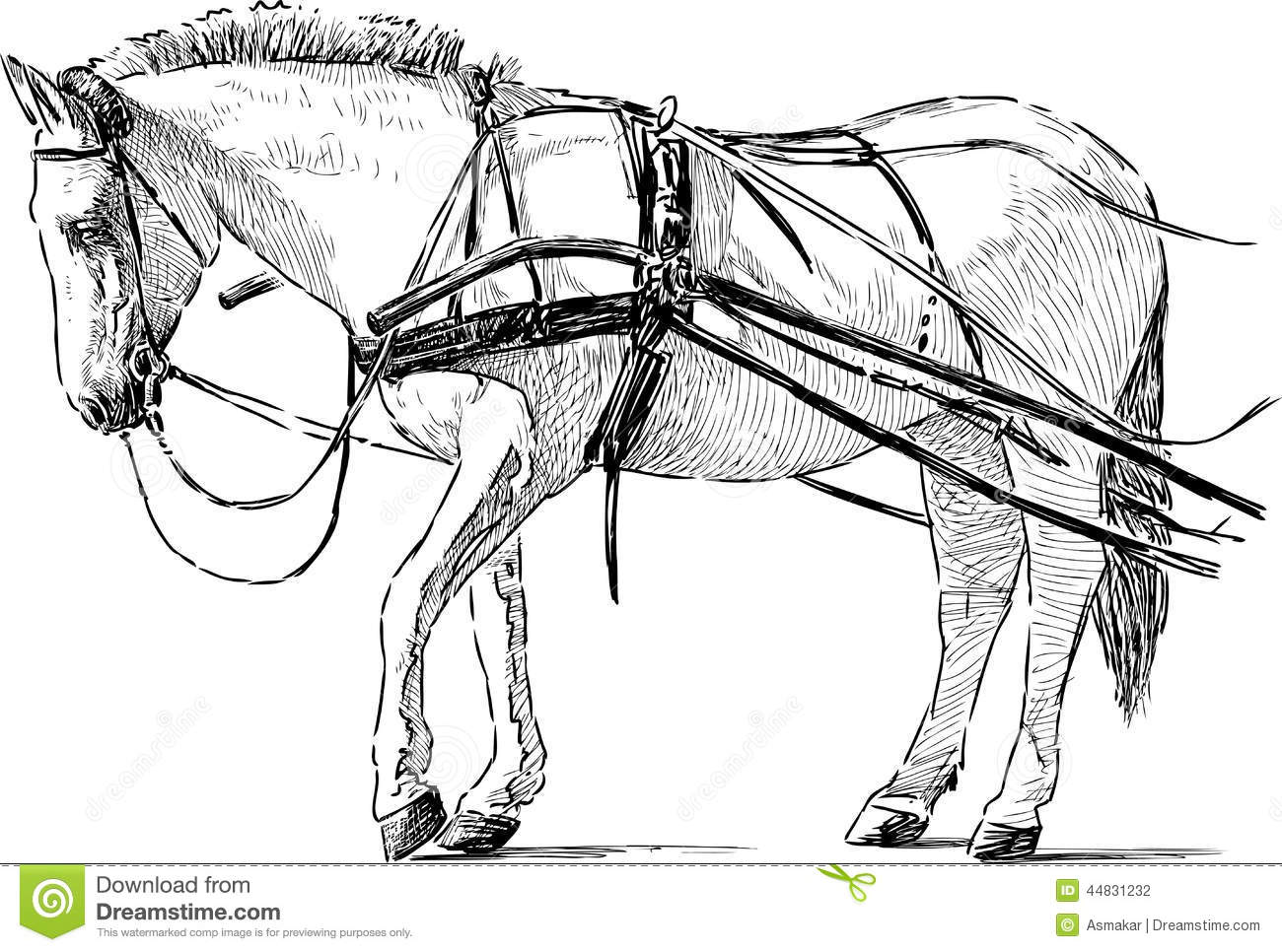 White Horse In The Harness Stock Vector Illustration Of