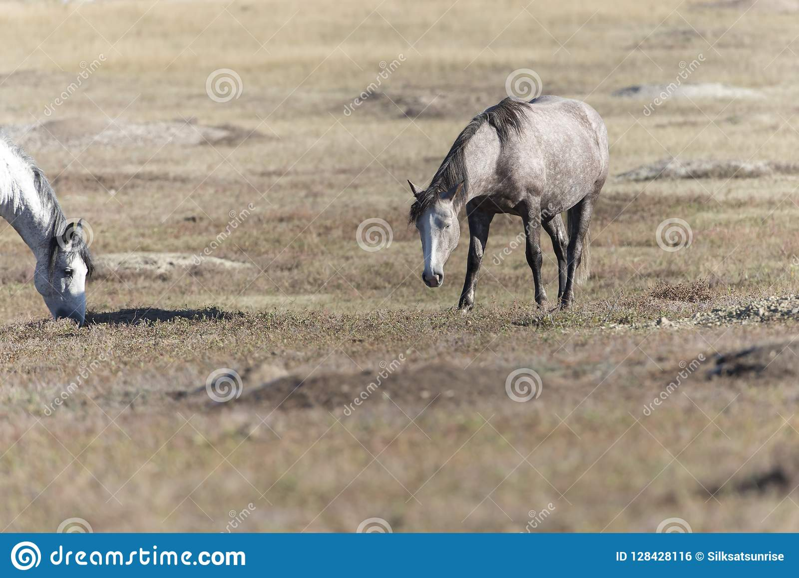 Wild Mustang At Theodore Roosevelt National Park Badlands