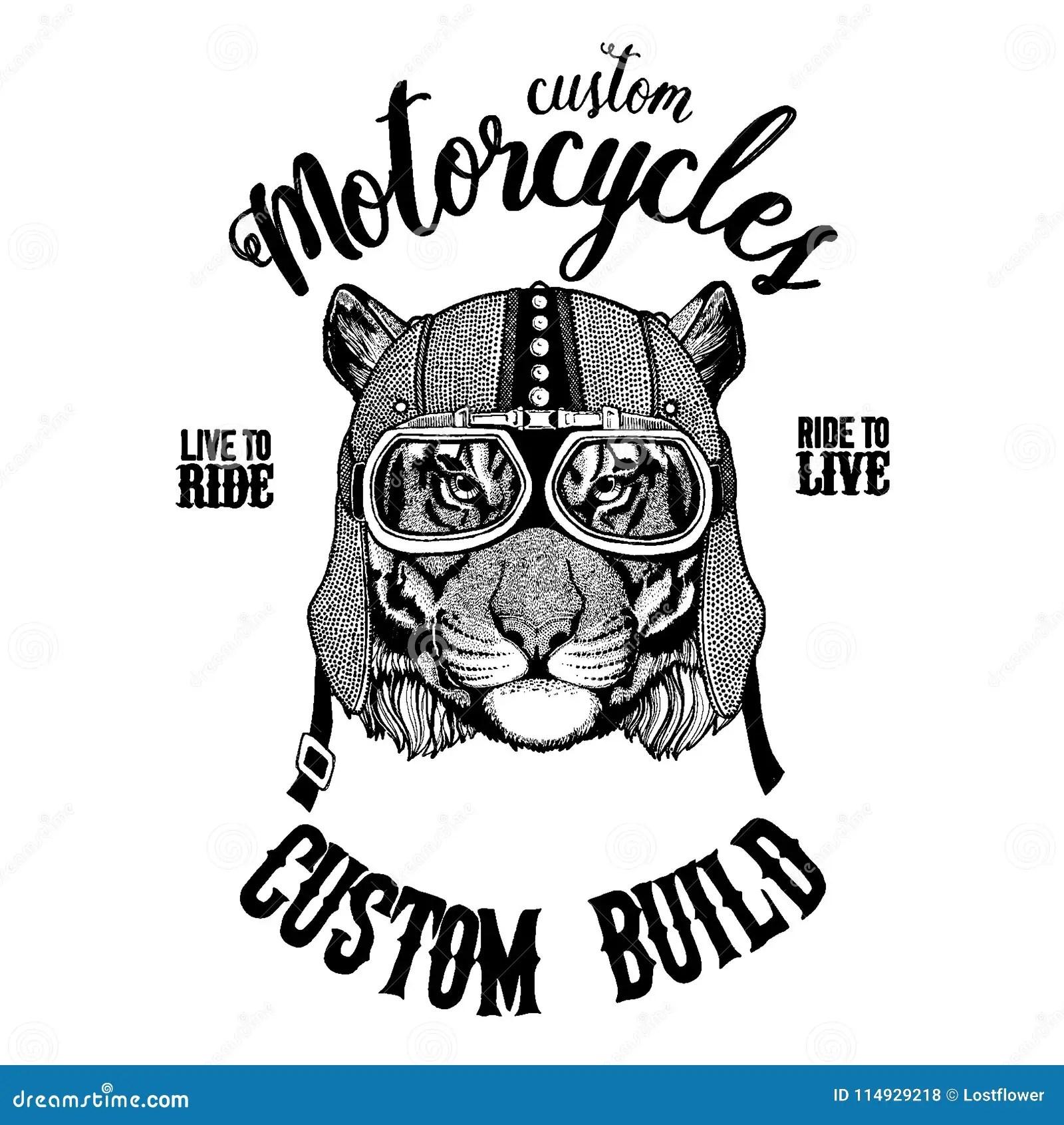 Wild Tiger Biker Motorcycle Animal Hand Drawn Image For