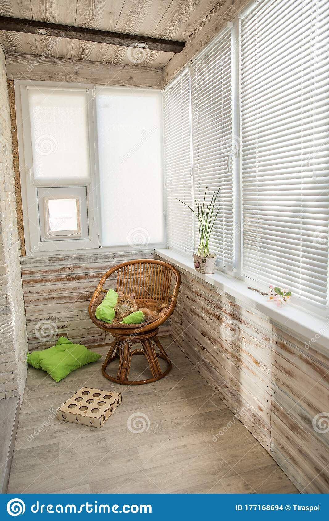 window sill pillow for rest with grass plant pot home rest space on kitchen windowsill interior with sunlight spring bucket stock photo image of building floor 177168694