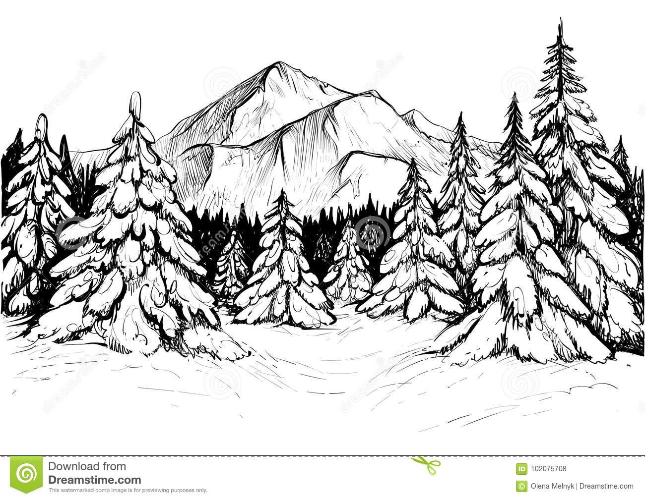 Winter Forest In Mountains Sketch Vector Hand Drawn