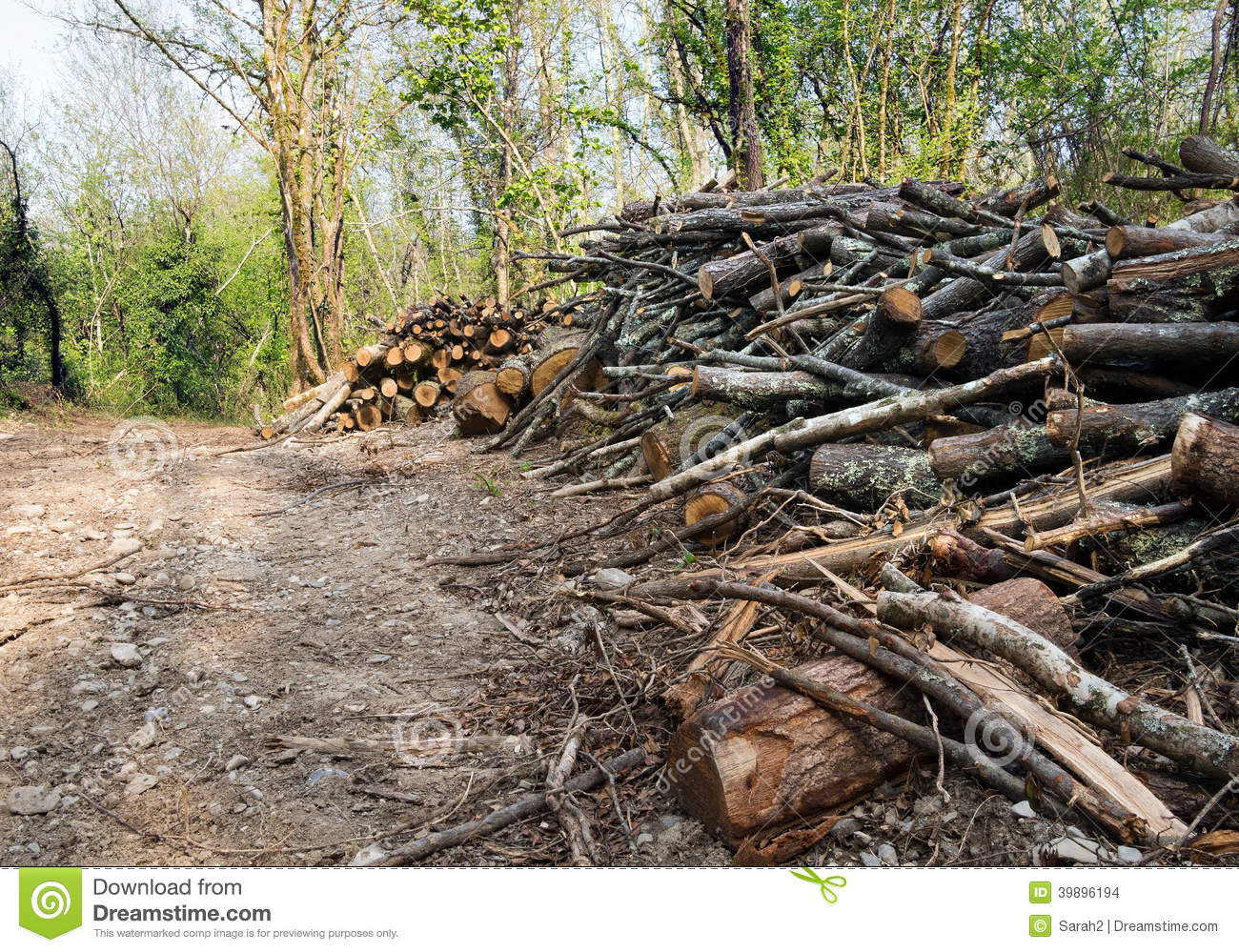 Woodland Management Or Cutting Down Trees Habitat