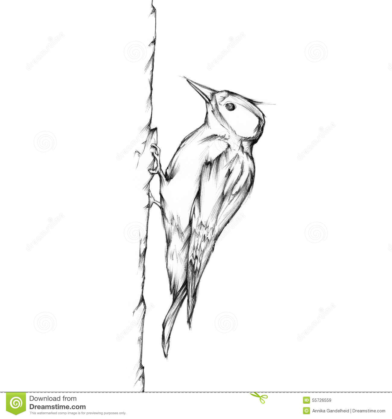 Woodpecker On A Tree Stock Illustration