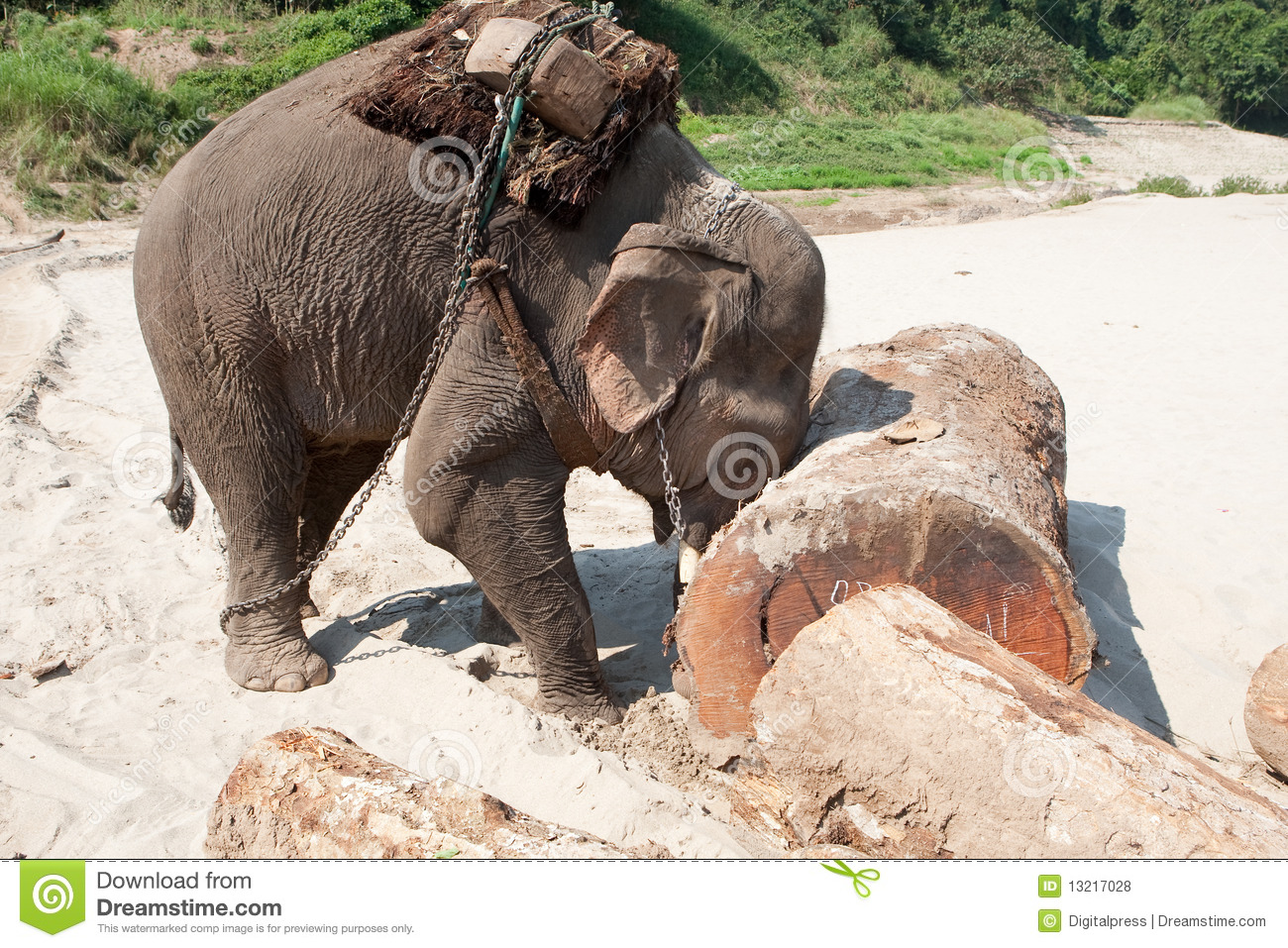 Working Elephant Stock Photo Image Of Benefit Transport