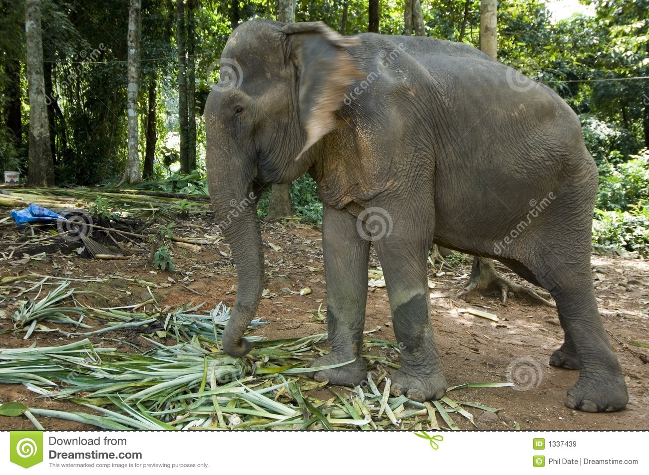 Working Elephant Royalty Free Stock Images