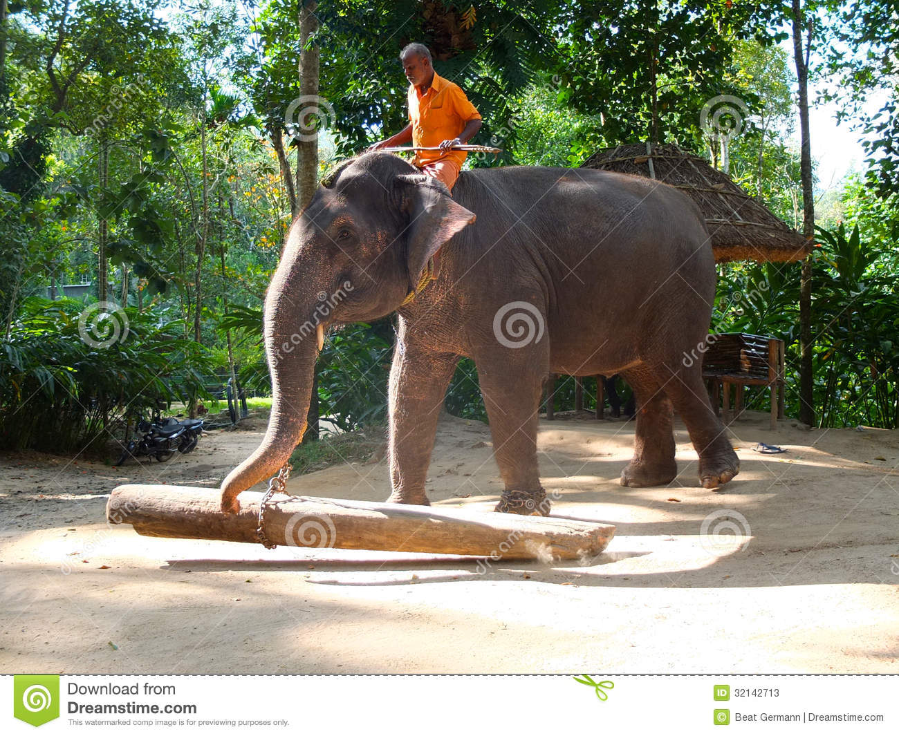 Working Elephant Kerala India Editorial Stock Photo