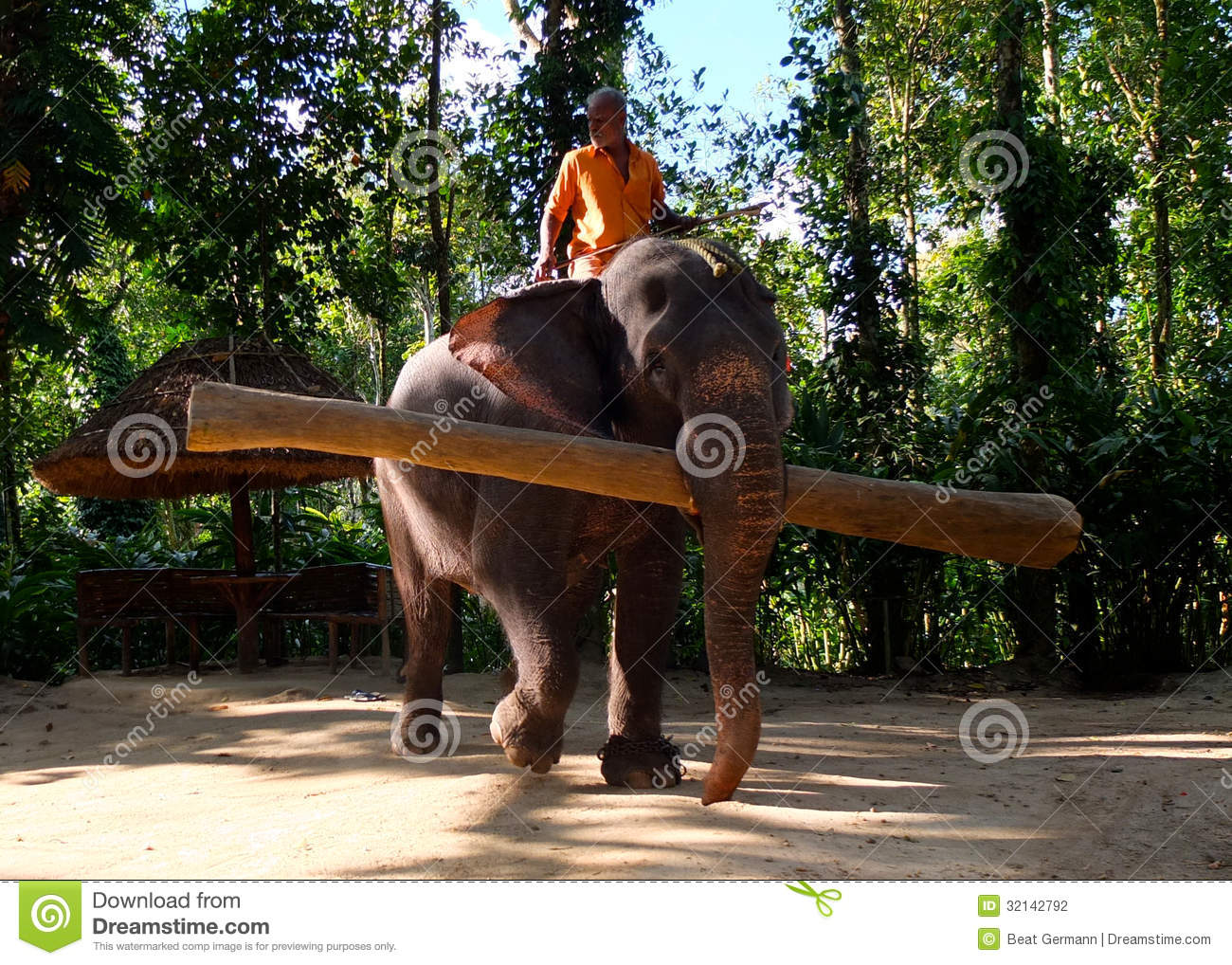 Working Elephant Kerala India Editorial Photography