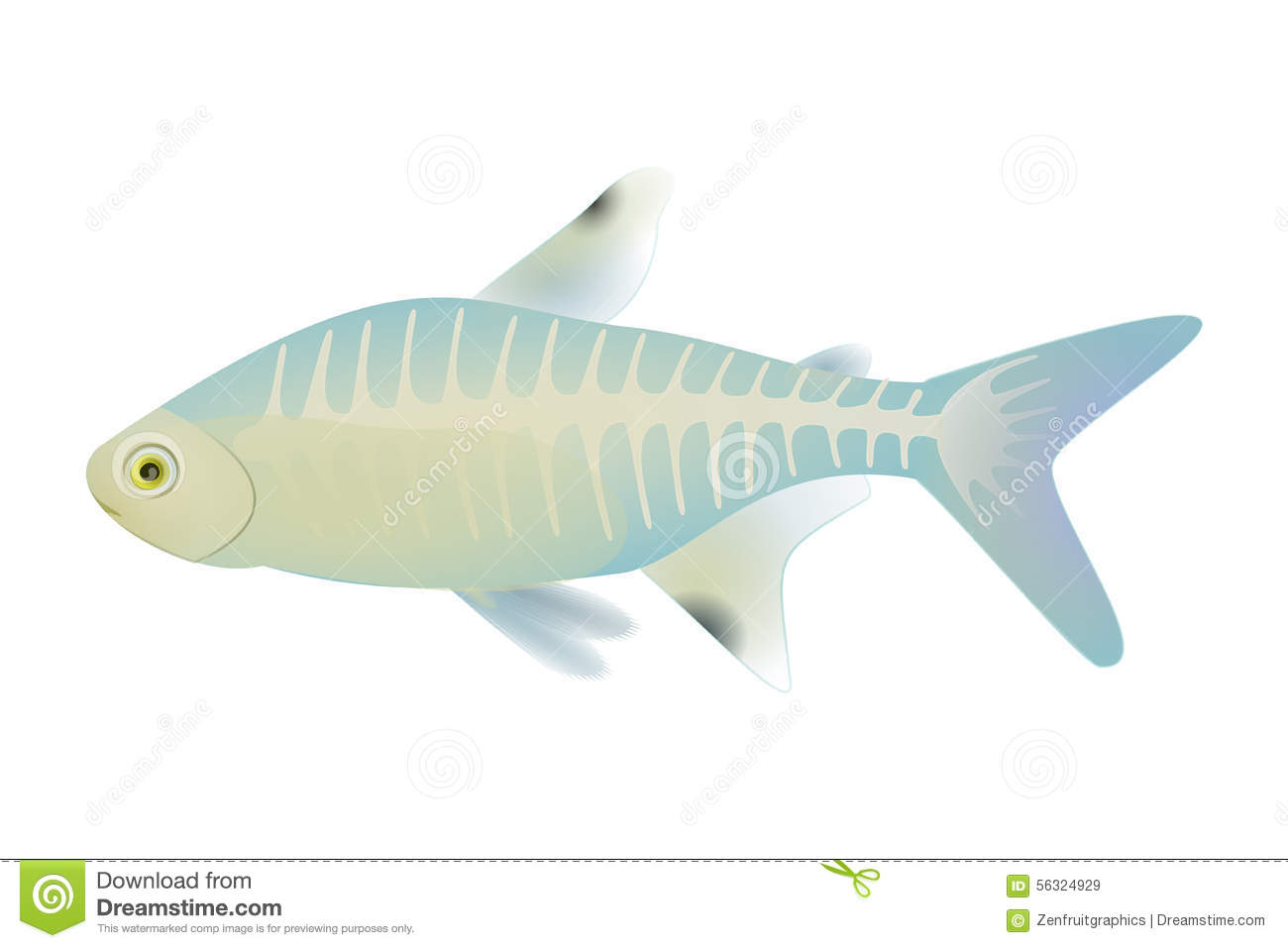 X Ray Fish Vector Antarctic Animal X Ray Fish Vector