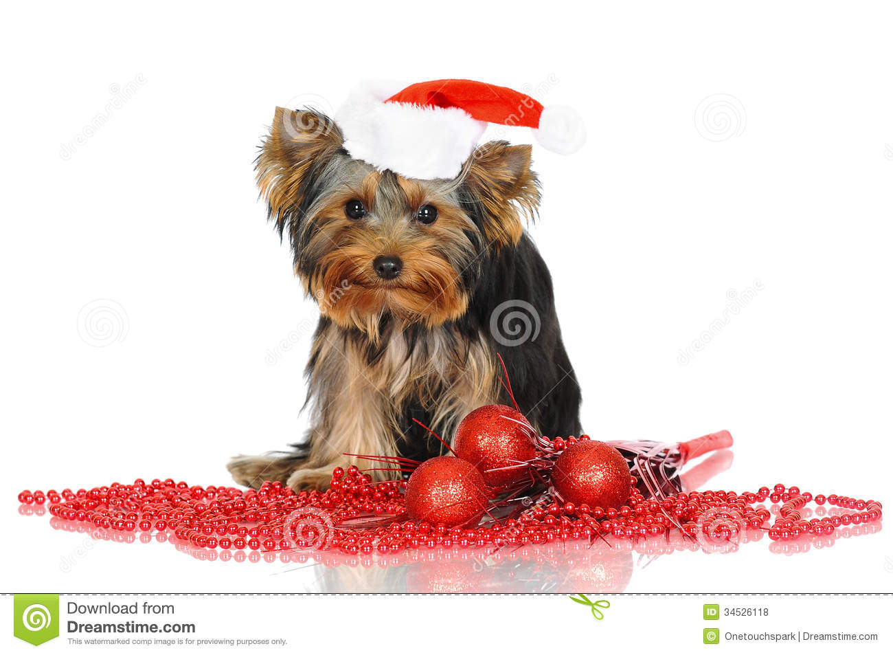 Yorkshire Terrier Puppy In A Santa Hat Stock Photo Image
