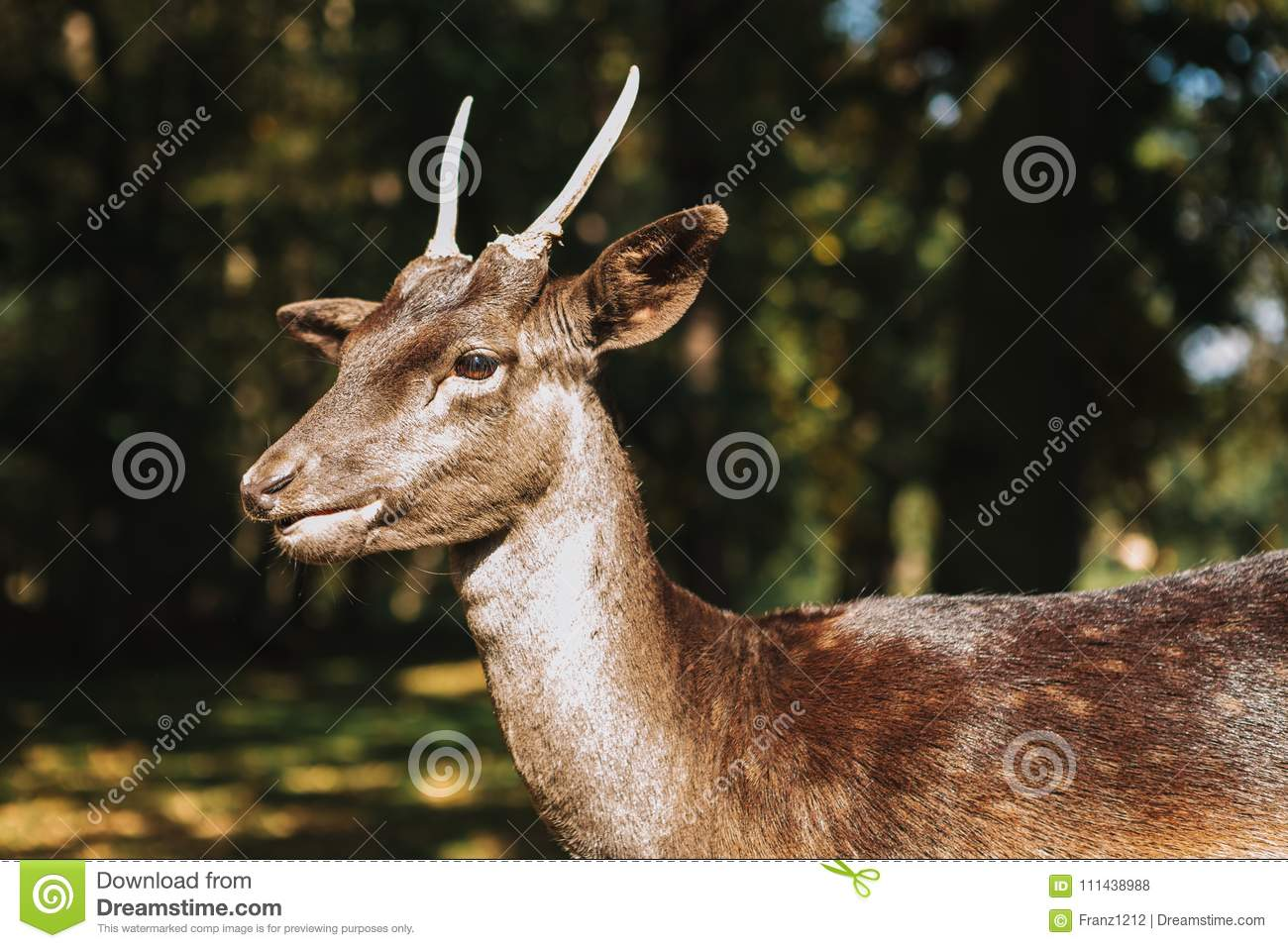 A Young Deer In Its Natural Habitat Stock Photo