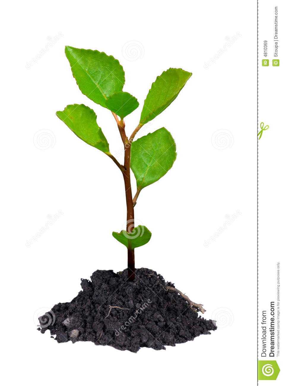 Young Tree Royalty Free Stock Images Image 4810369