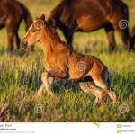 Young Wild Pretty Foal On Green Meadow Stock Image Image Of Animal Cute 118403943