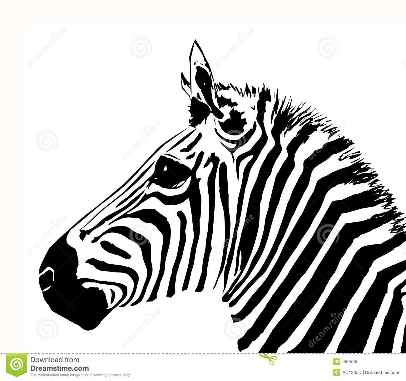 Zebra Stock Vector Illustration Of Material Animal