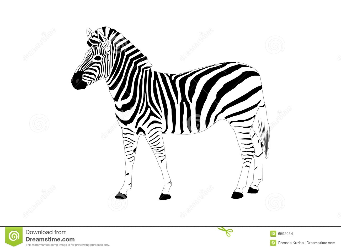 Zebra Illustration Stock Illustration Image Of Drawing