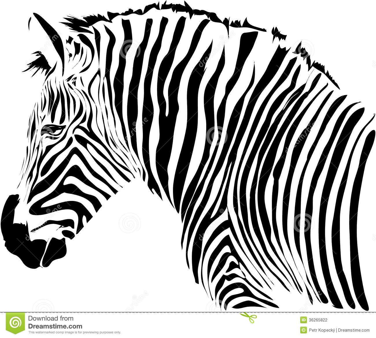 Zebra Illustration Stock Photography
