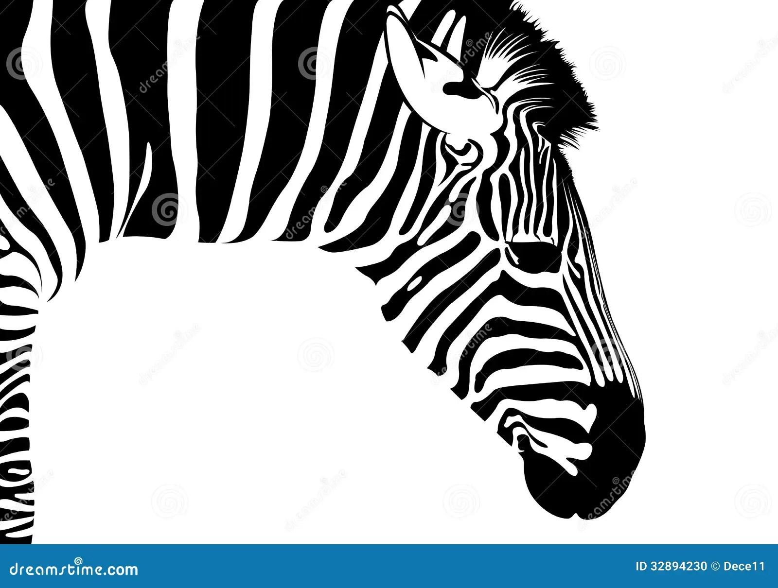 Zebra Isolated Stock Vector Illustration Of Detail