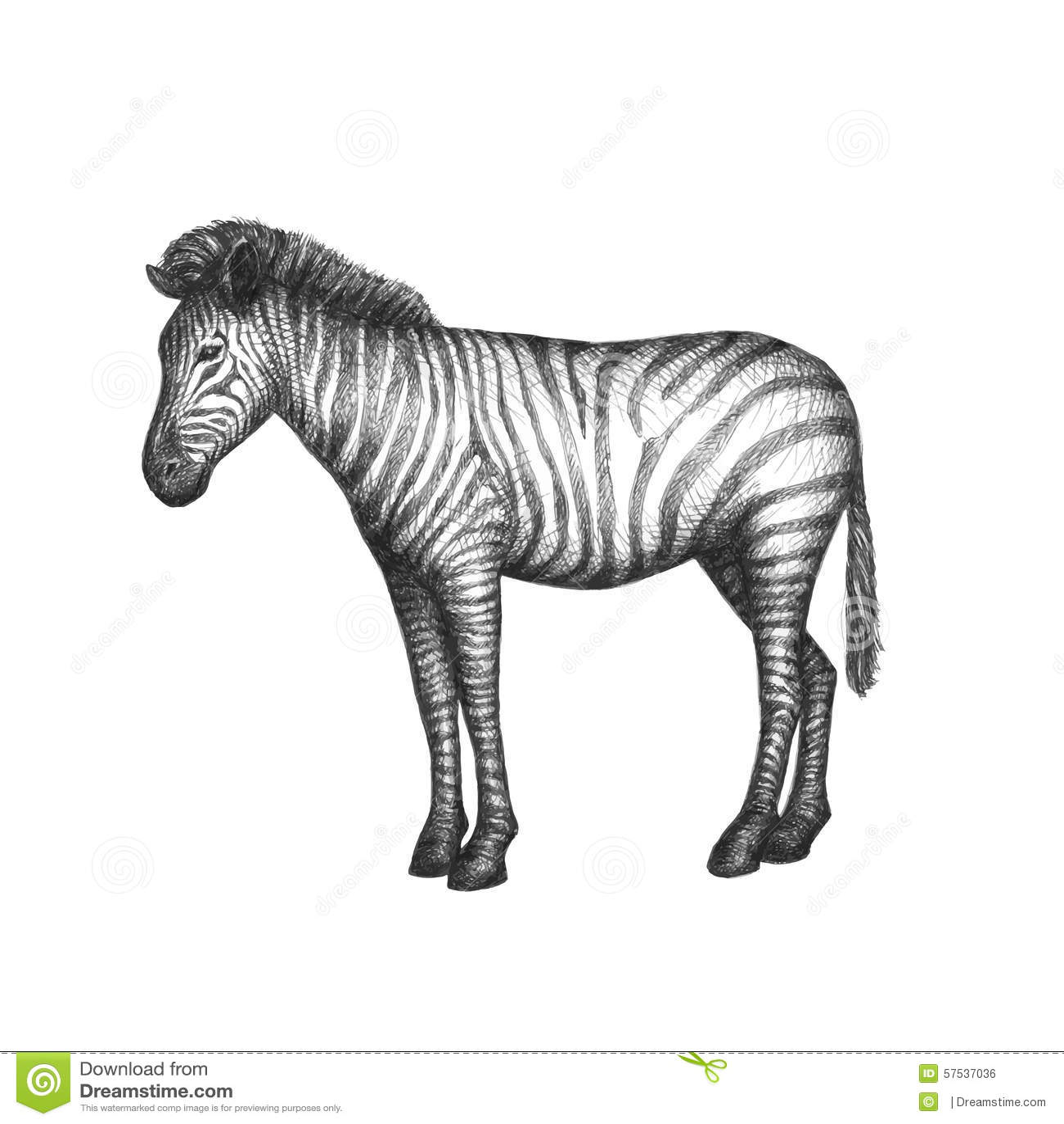 Zebra Background Clipart