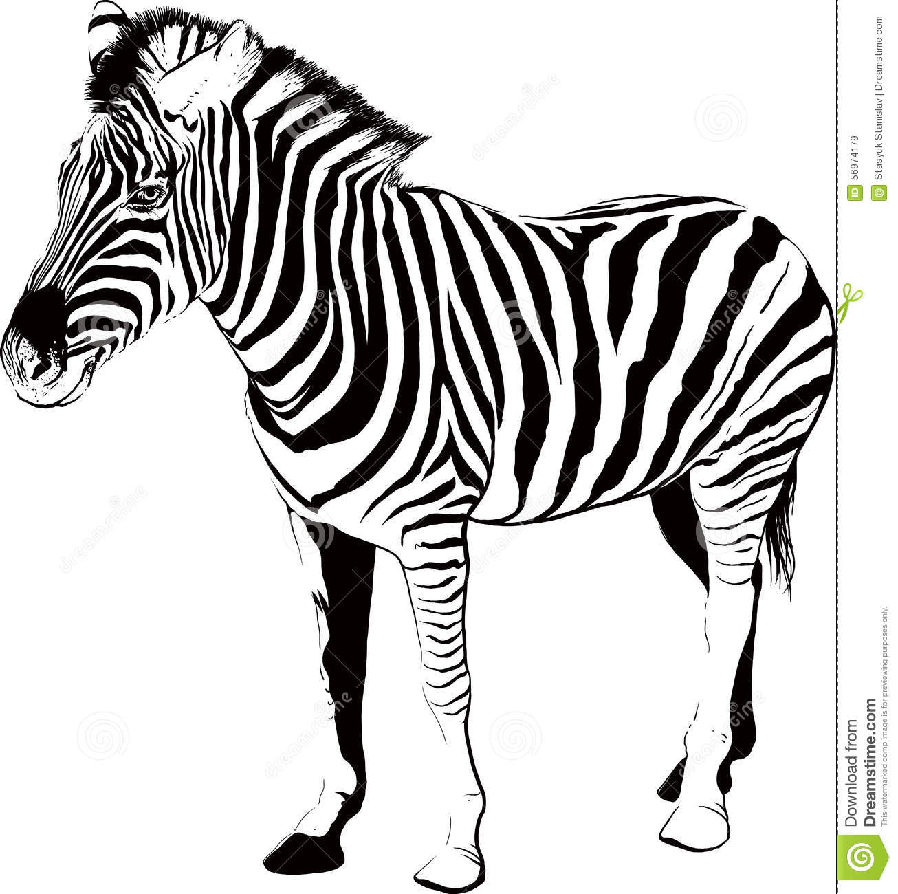 Zebra In Profile Stock Vector