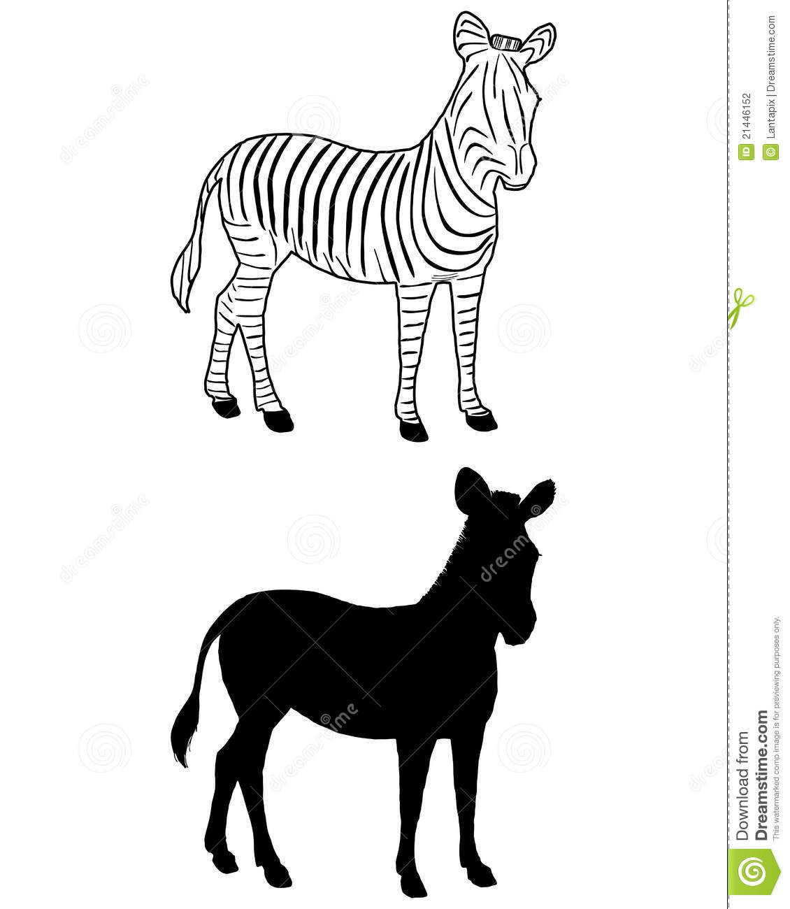 Zebra Silhouette Stock Vector Image Of Young Animal