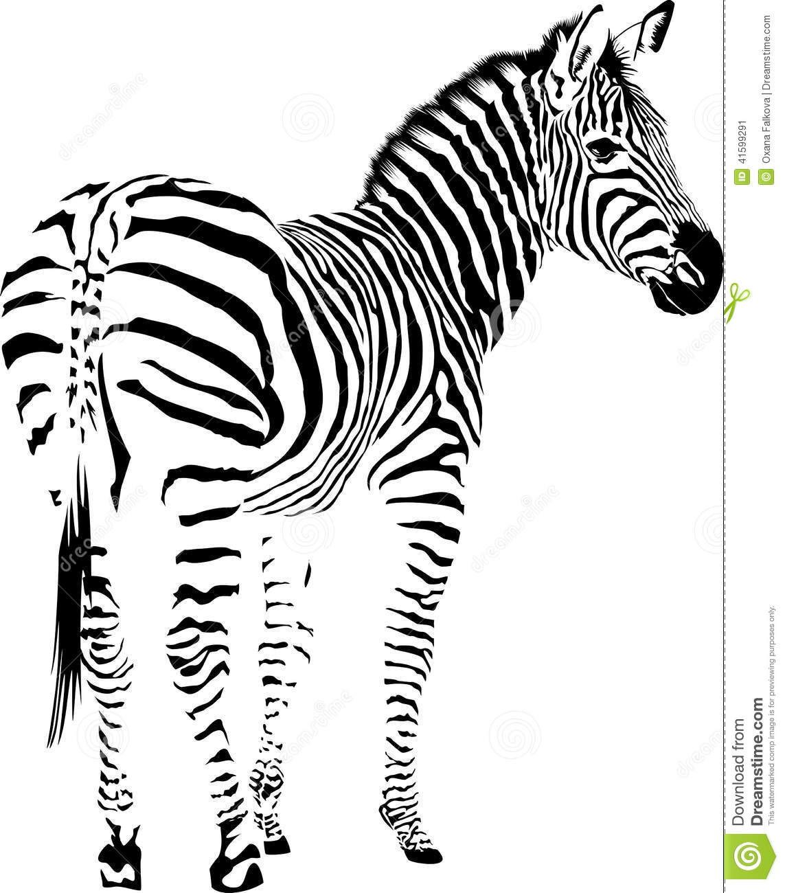 Zebra Stock Vector Illustration Of White Black Mammal