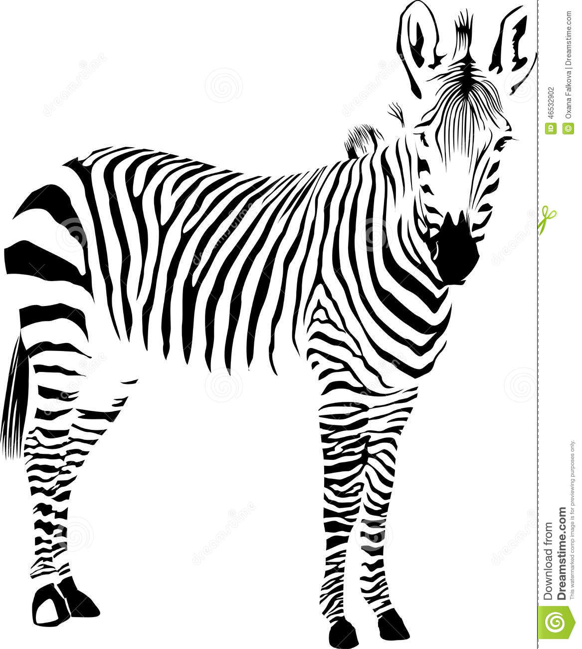 Zebra Stock Vector