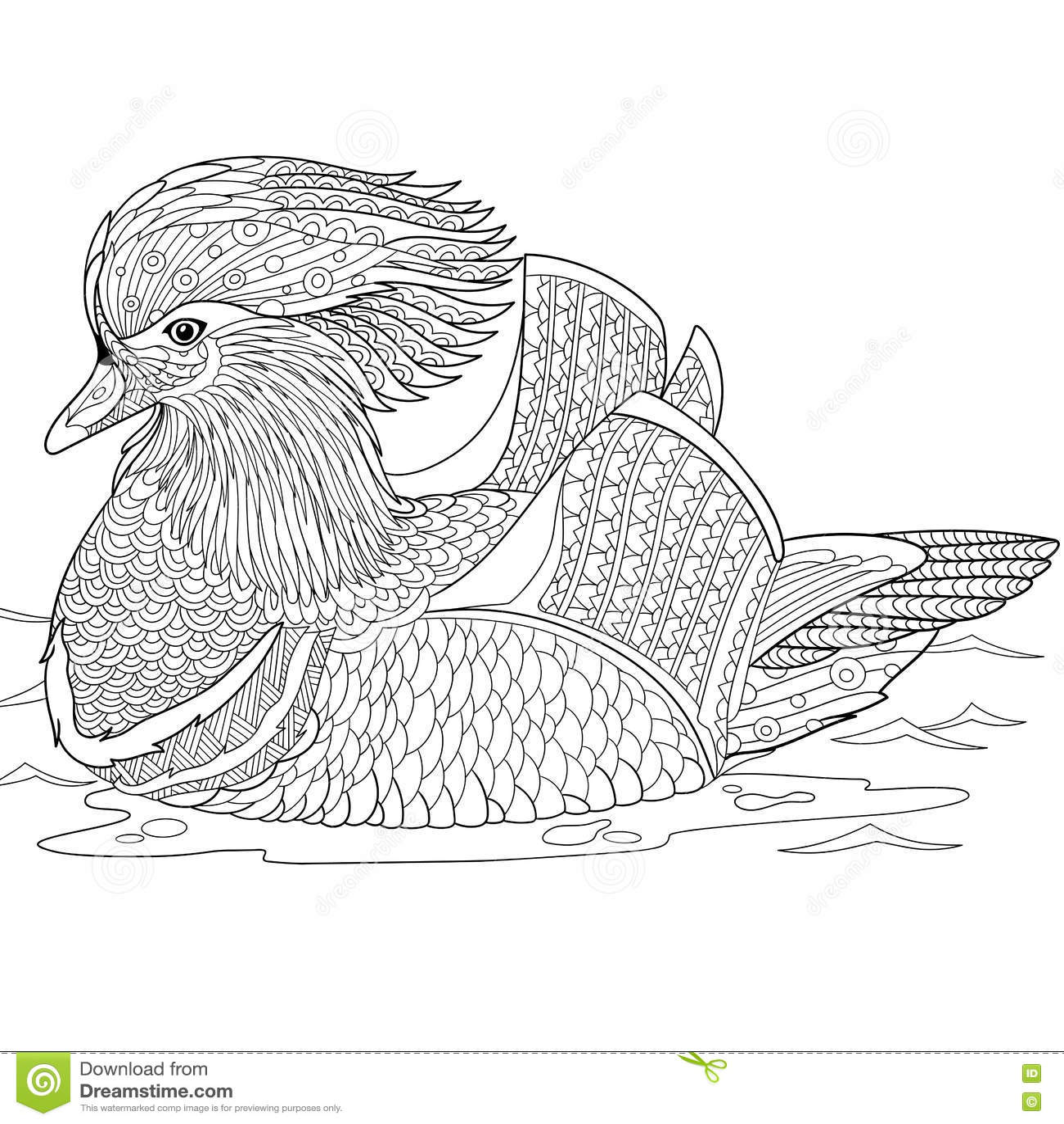 Zentangle Stylized Mandarin Duck Stock Vector