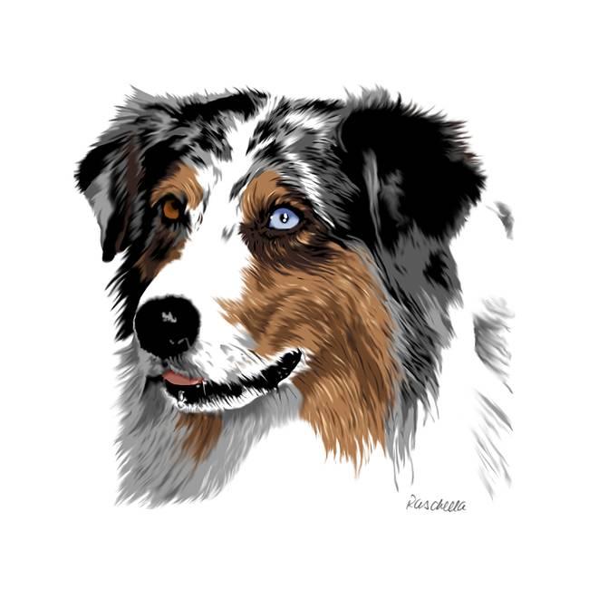 Australian Shepherd by Carole Raschella (650 x 650 Pixel)