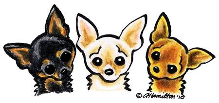 Stunning Chihuahua Pencil Drawings And Illustrations For