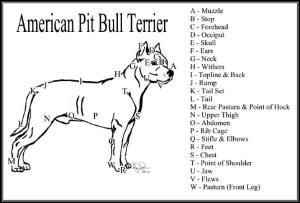 Mod The Sims  Blue and White American Pit Bull