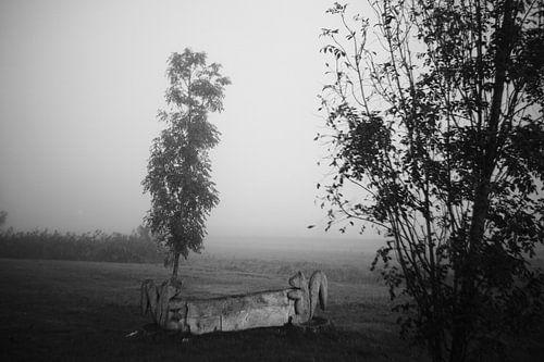 Bomen in de mist in de Zuidpolder