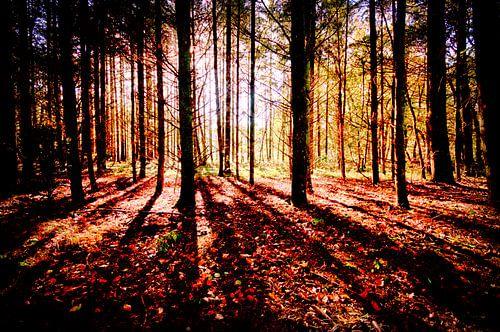 Ochtend zon in het bos